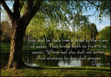Psalm_1_3m
