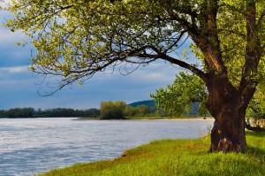 tree-river-300x199